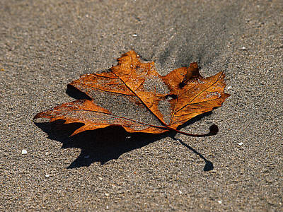 Photograph - Leaf Composed by Joe Schofield