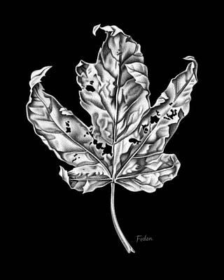 Leaf Art Print by David Fedan