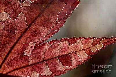 Art Print featuring the photograph Leaf Detail by Kenny Glotfelty