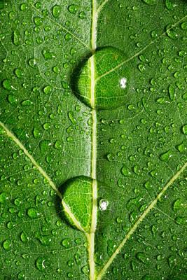 Leaf Dew Drop Number 10 Original by Steve Gadomski