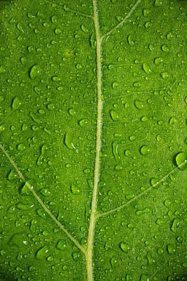 Leaf Dew Drop Number 6 Original by Steve Gadomski