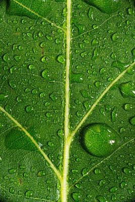 Leaf Dew Drop Number 8 Original by Steve Gadomski