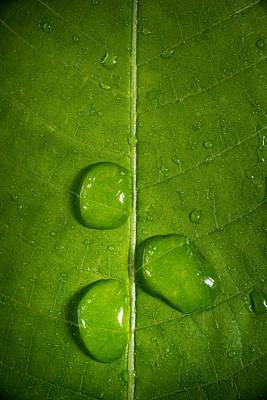 Leaf Dew Drop Number 9 Original by Steve Gadomski
