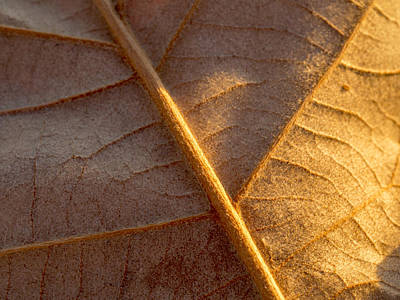 Photograph - Leaf by Dustin  LeFevre