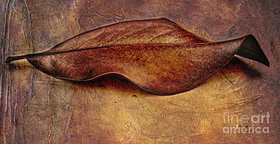 Manipulation Photograph - Leaf by Elena Nosyreva