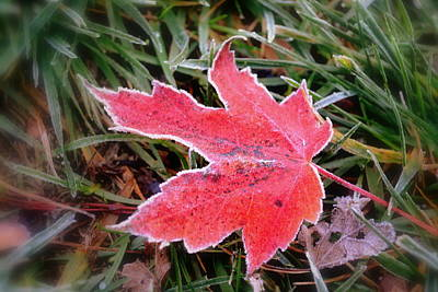 Photograph - Leaf Frost by Michelle Ayn Potter