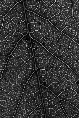 Photograph - Leaf In Detail by Morgan Wright