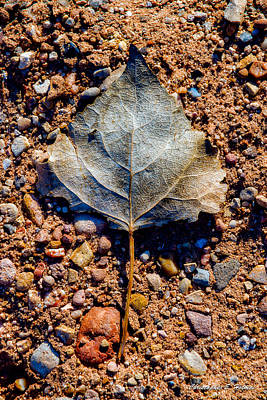 Photograph - Leaf In Grit by Christopher Holmes