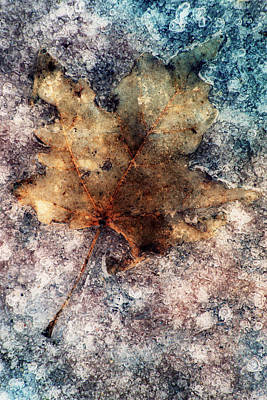 Photograph - Leaf In Ice by Jack Daulton