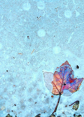 Leaf In Ice Art Print