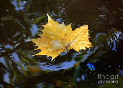 Leaf In Pond Art Print
