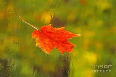 Photograph - Leaf In Rain by Eva Kato