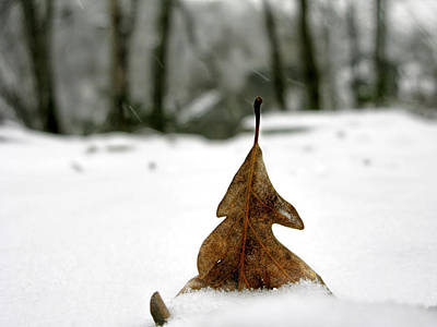 Lobby Photograph - Leaf In Snow On Billy Goat Trail by Francis Sullivan