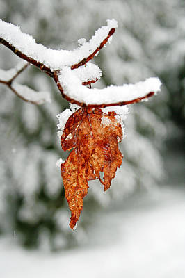 Art Print featuring the photograph Leaf In Winter by Barbara West