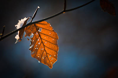 Wall Art - Photograph - Leaf In Winter by Claus Puhlmann