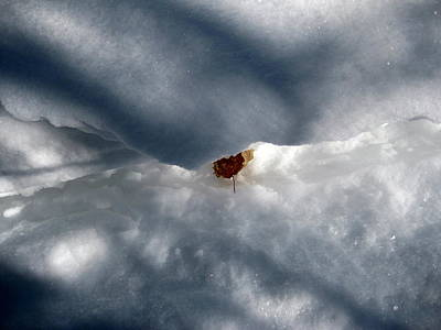 Photograph - Leaf In Winter Landscape by Carolyn Reinhart
