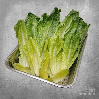 Mixed Media - Leaf Lettuce by Andee Design
