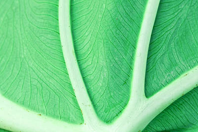 Royalty-Free and Rights-Managed Images - Leaf Macro by Alexey Stiop