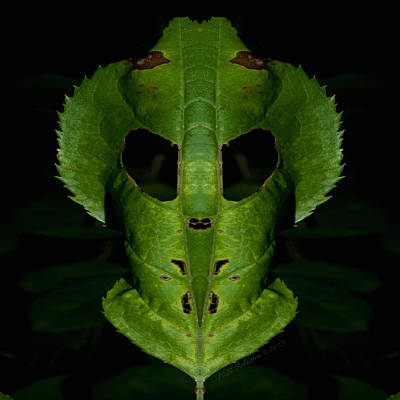 Photograph - Leaf Mask by WB Johnston