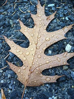Leaf Art Print by Michelle Simard
