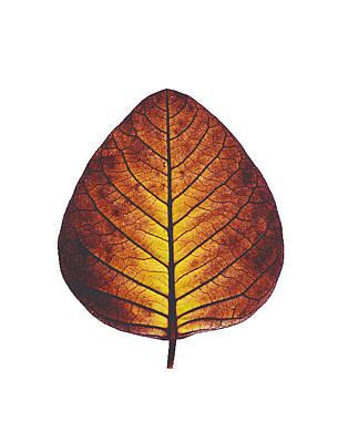 Golden Leaf Photograph - Leaf Of Serenity by Sumit Mehndiratta
