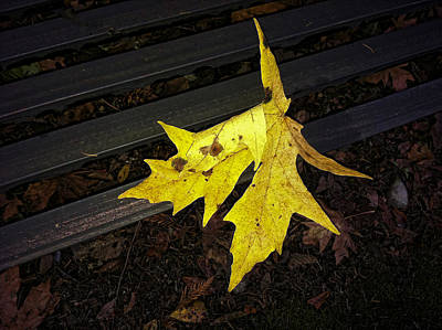 Photograph - Leaf On A Bench by Ron Roberts