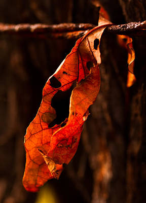 Photograph - Leaf On A Wire by Haren Images- Kriss Haren