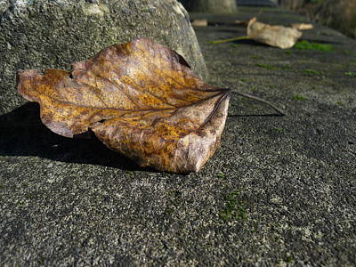 Photograph - Leaf On Concrete by HW Kateley