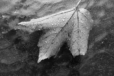 Photograph - Leaf On Glass by John Schneider