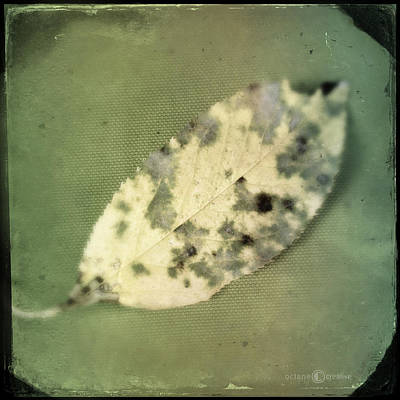 Photograph - Leaf On Green Fabric by Tim Nyberg