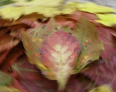 Leaf On Leaves 1 Art Print