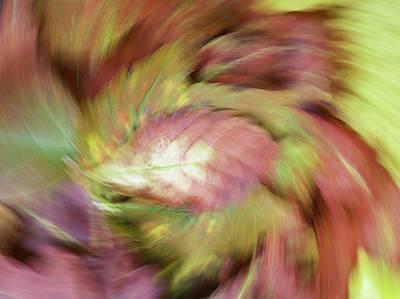Leaf On Leaves 3 Art Print