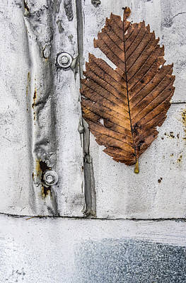 Close-up Photograph - Leaf On Metal Roof by Arkady Kunysz