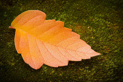 Nature Study Photograph - Leaf On Moss by Adam Romanowicz