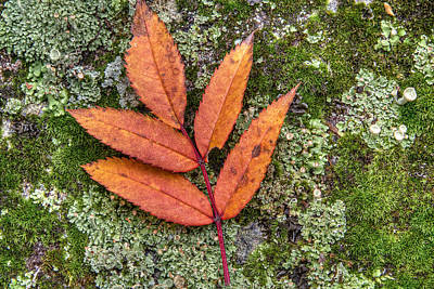 Leaves On Rock Photograph - Leaf On Mossy Rock by Jeffrey Ewig