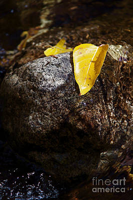 Leaf On Rock Art Print by ELITE IMAGE photography By Chad McDermott