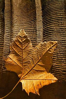 Photograph - Leaf On Terra Cotta by Nikolyn McDonald