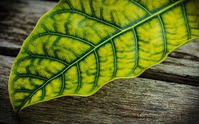 Photograph - Leaf On Wooden Table by Marco Oliveira