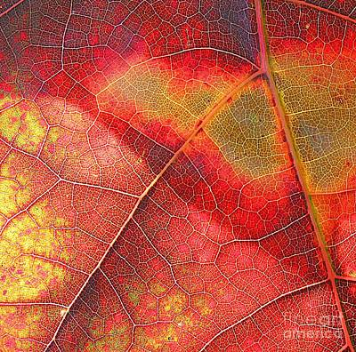Photograph - Leaf Pattern_1 by Halyna  Yarova