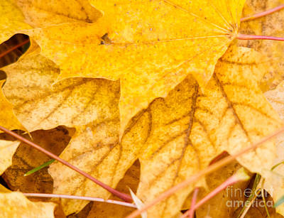 Fall Leaves Photograph - Leaf Patterns by Cheryl Baxter