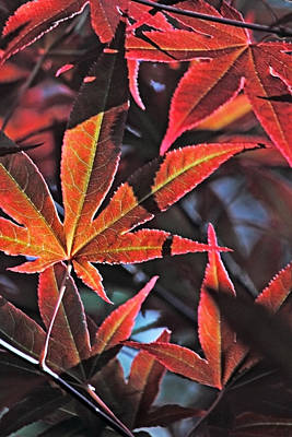Photograph - Leaf Patterns Ll by Theo OConnor
