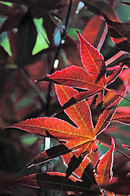 Photograph - Leaf Patterns Lll by Theo OConnor