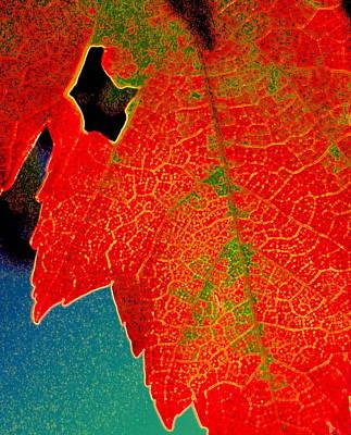 Photograph - Leaf Pop by Kathy Bassett