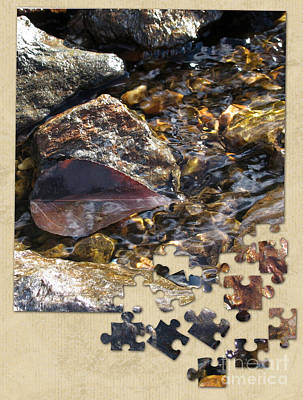 Photograph - Leaf Puzzle-2 by Leone Lund