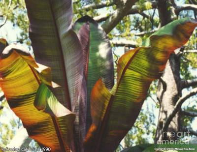 Photograph - Leaf Reflection by Marlene Rose Besso