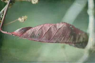 Photograph - Leaf by Ron Roberts