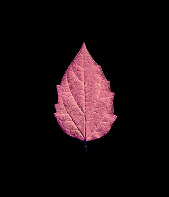 Tree Mixed Media - Leaf Series Fire Leaf by Sumit Mehndiratta