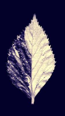 Mixed Media - Leaf Series Twin Shade by Sumit Mehndiratta