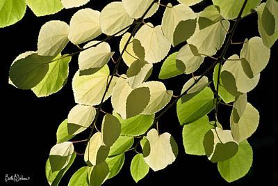 Katsura Wall Art - Photograph - Katsura Tree Leaf Shadows by Beth B Johns