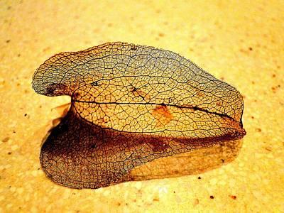 Leaf Skeleton Art Print by EdCindy Croal